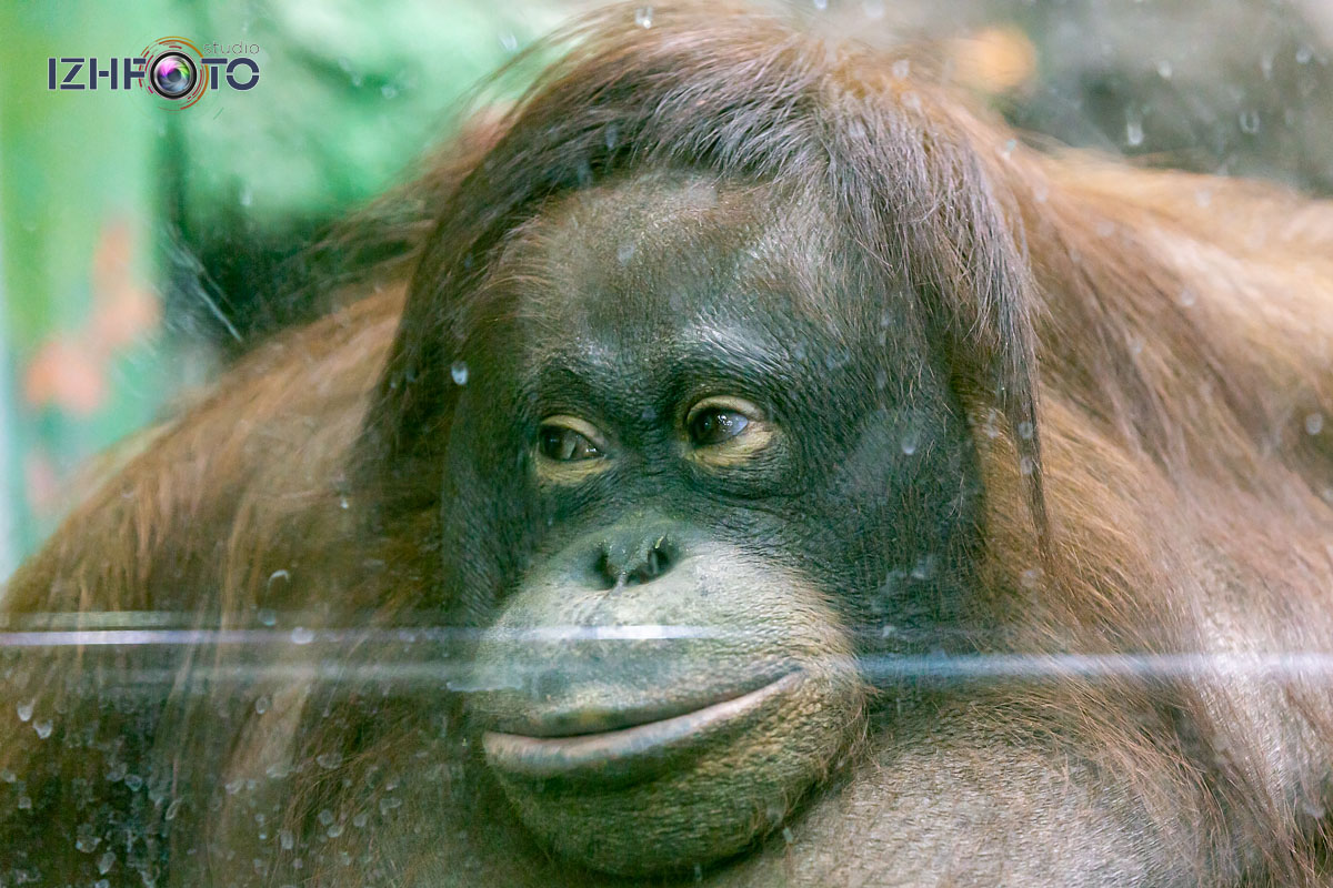 Обитатели Страны обезьян в Ижевском зоопарке Фото