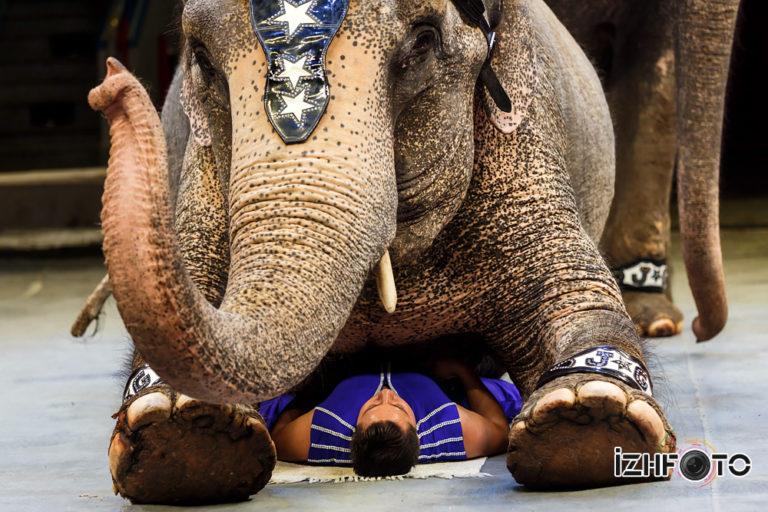 Слоны цирк