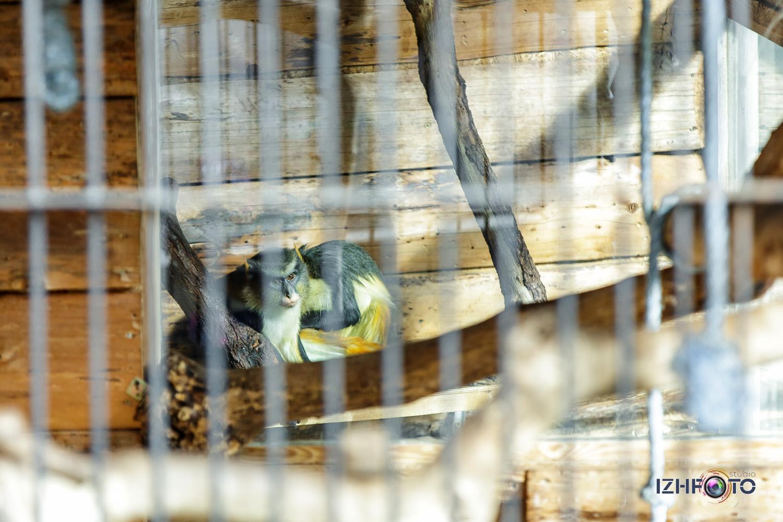 Обезьяны в зоопарке Ялта Крым