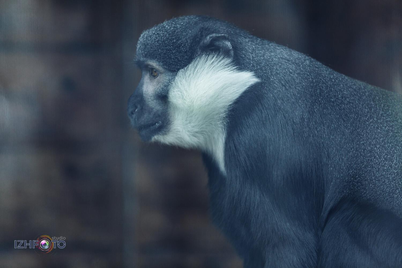 Фото обитателей зоопарка