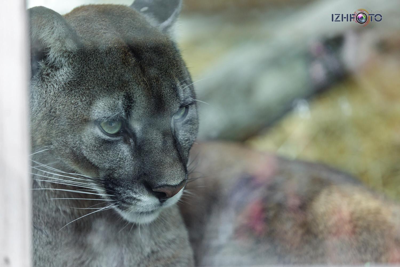 Питомцы ялтинского зоопарка фото