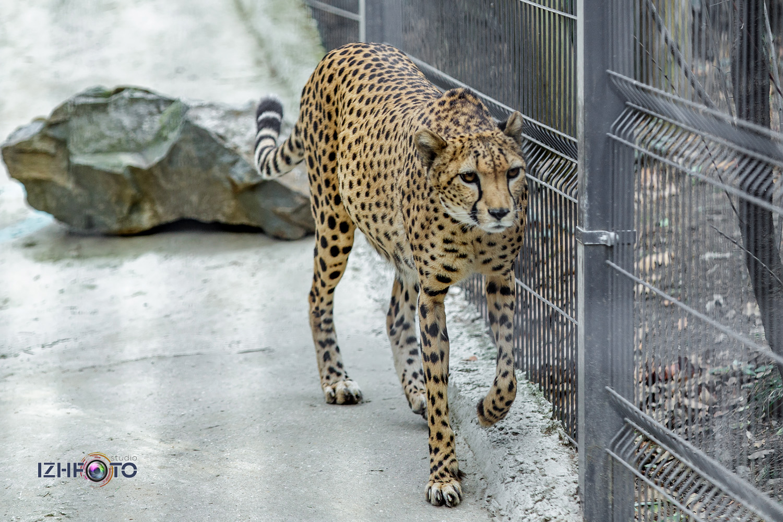 Фото хищников в зоопарке Ялты