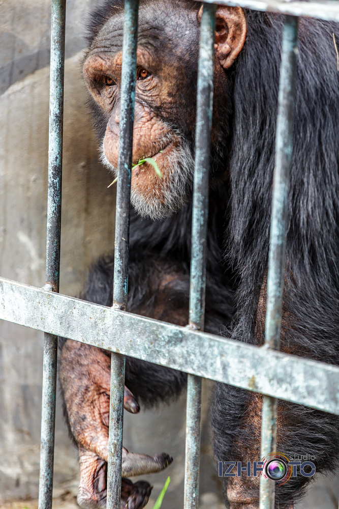 Yalta Intourist zoo photo