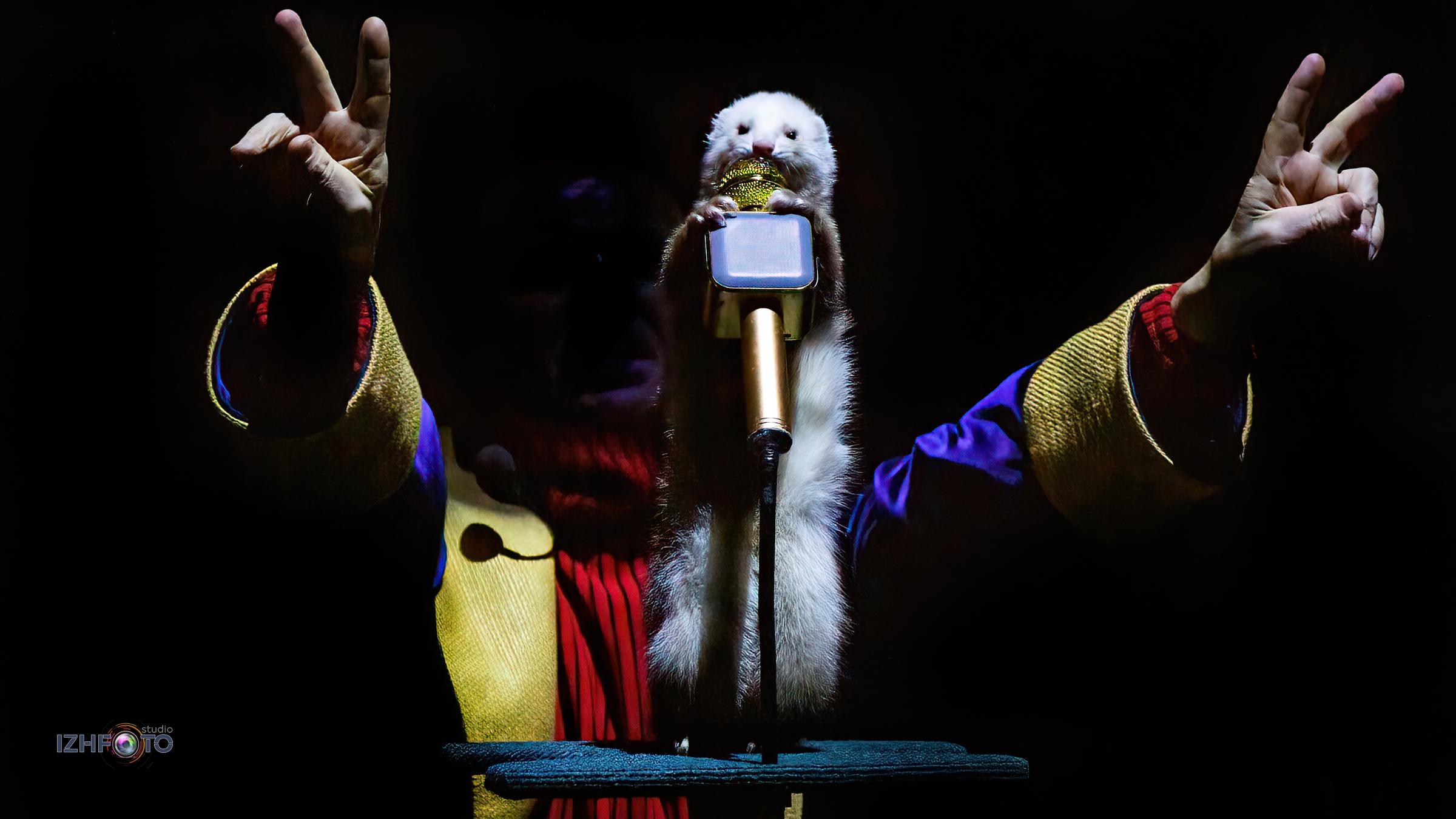 Хорьки-музыканты выступают в цирке